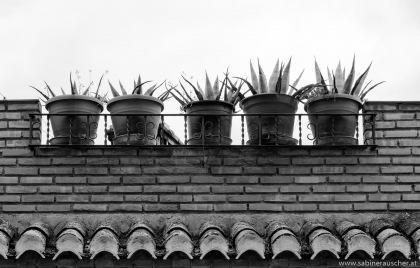flowerpots on the roof terrace in Granada | Blumentöpfe auf einer Dachterrasse in Granada