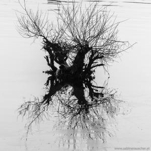 mirrowing tree in the frozen Danube, Vienna   Kältewelle 2017 in Wien - sogar die Donau ist zugefroren