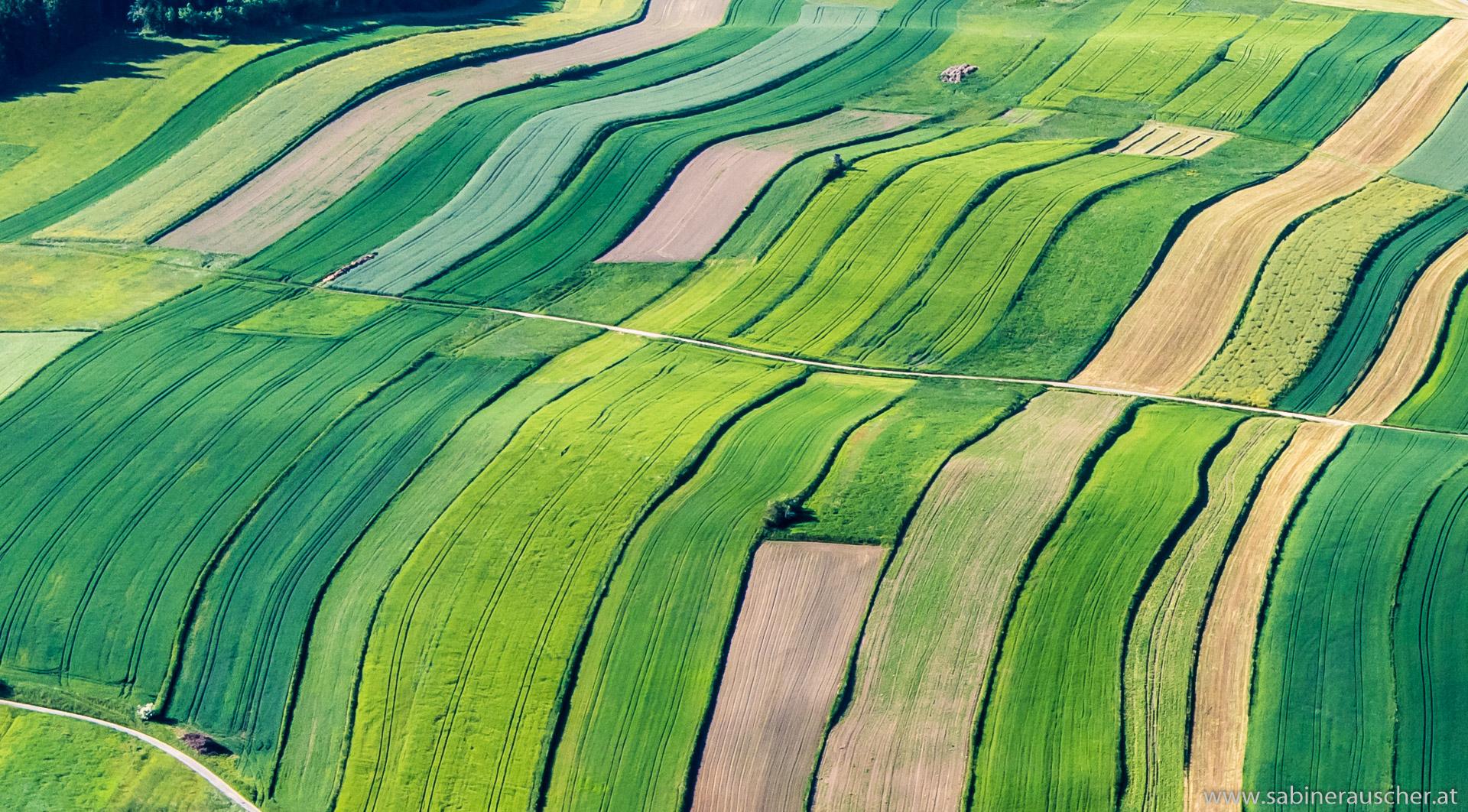 fields from above   sommerliche Felder vom Gyrocopter aus gesehen