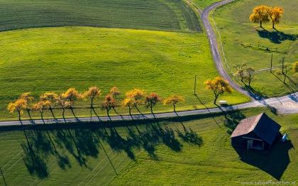trees and their shadows in the afternoon sun   herbstliche Nachmittagssonne während eines Gyrocopterflugs
