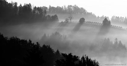 morning light and mist in the vineyard   Morgenlicht und Nebel im Weinberg