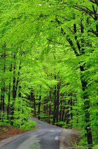 fresh green in spring   frisches Grün im Frühling