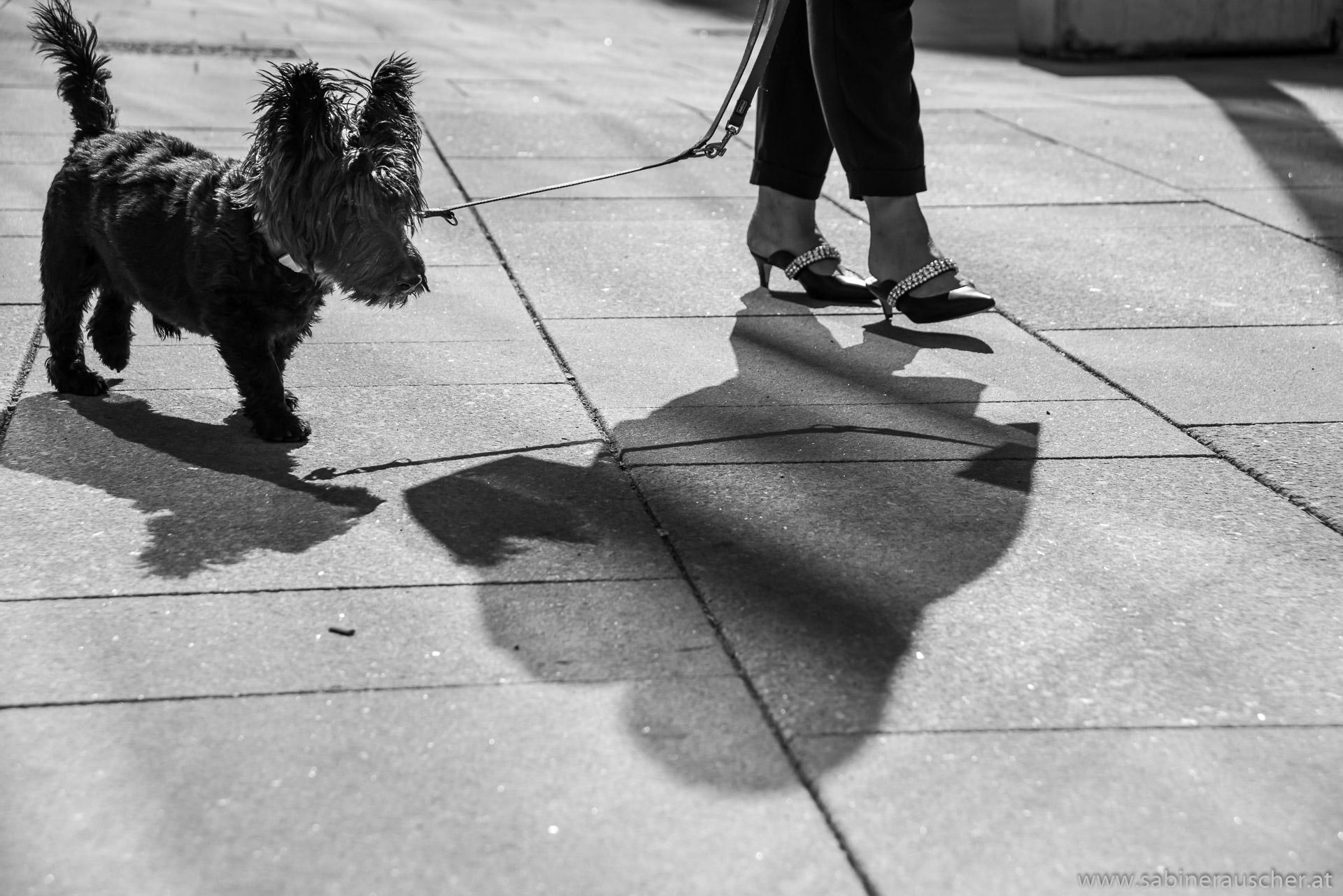 Walk the dog in Vienna | Spaziergang mit dem Hund in der Wiener Innenstadt