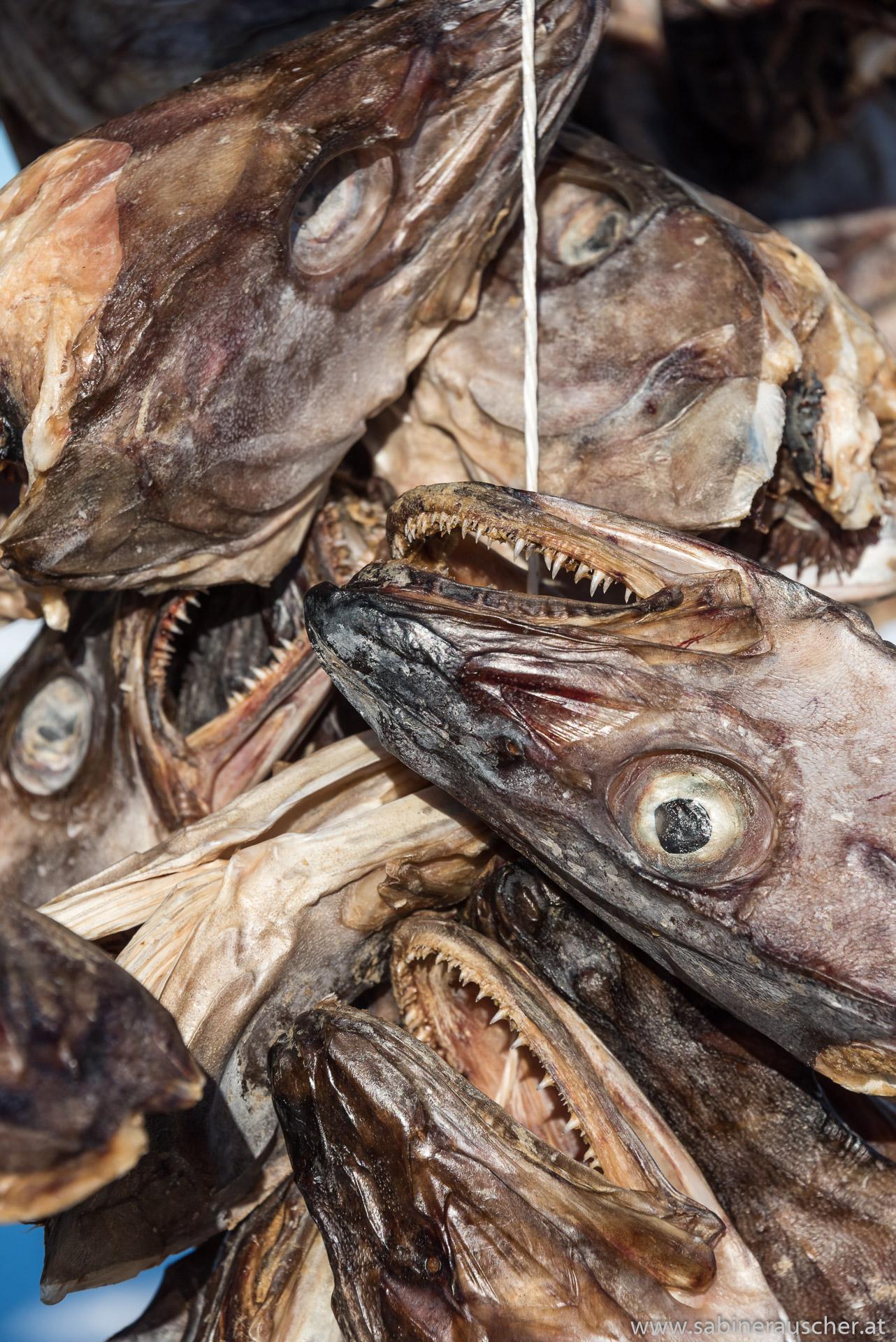 stock fish | norwegischer Torfisk also Stockfisch