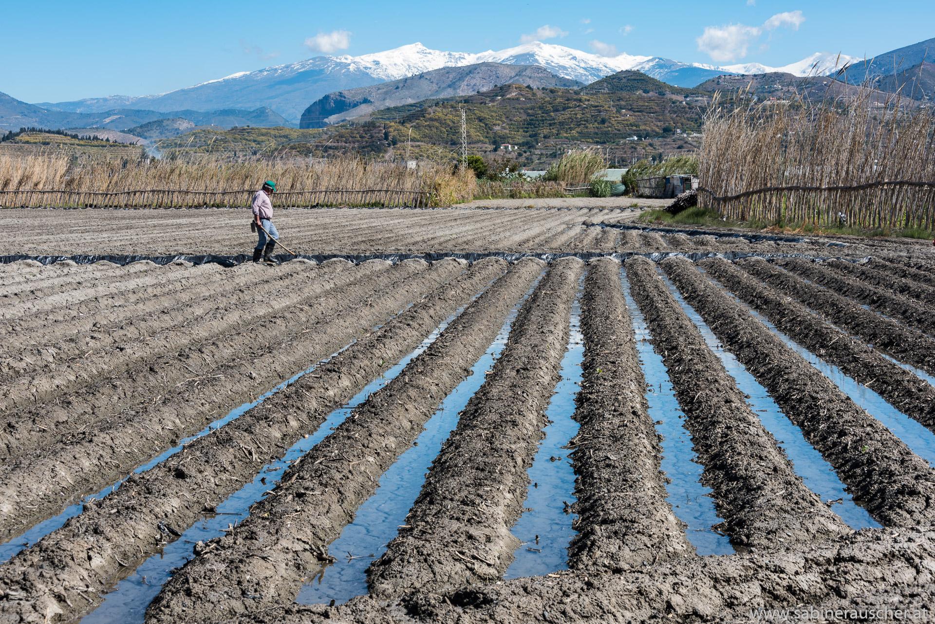 how to water and grow vegetables | Bewässerungsweise am Gemüseacker