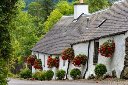 flower-bedecked house near Ballquidder | blumengeschmücktes Haus nahe Ballquidder