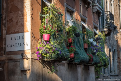 Venice - go green | Venedig - mediterrane Bepflanzung alten Stadtgemäuers