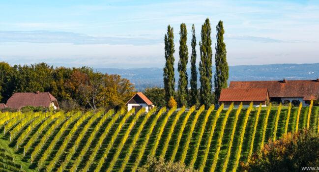 South Styria | Südsteiermark